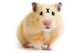 Xhamster Hack Exposes 380 Thousand User Accounts
