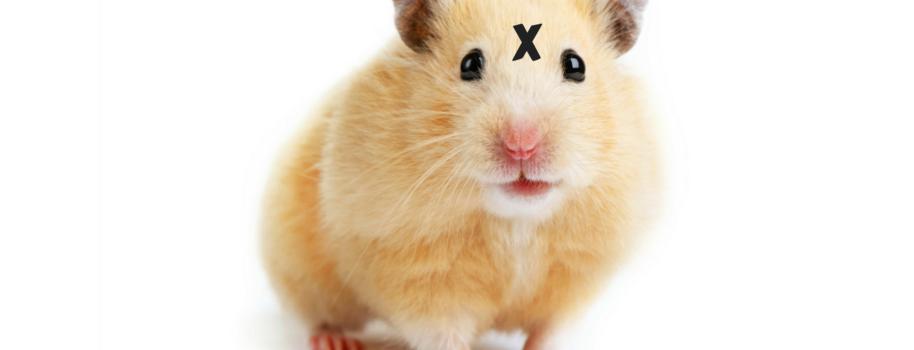 Free Porn Hamster Com